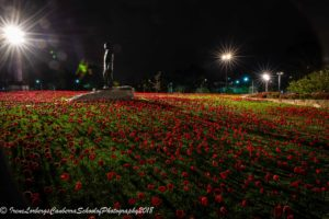 WarMemPoppies_09102018-8068-4